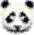 Pandateen image