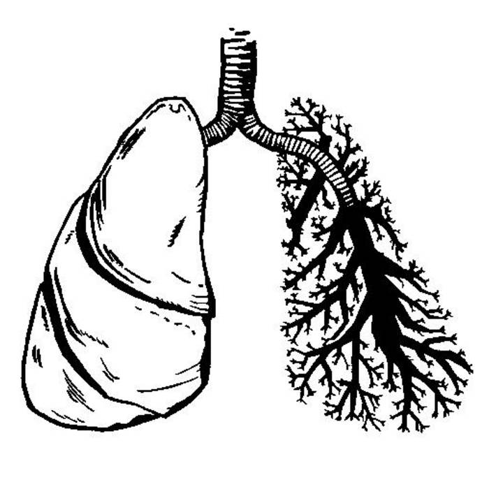 Lungs cover art