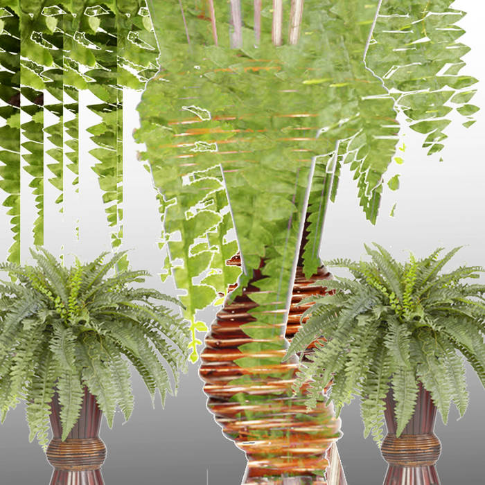POTTED FERN cover art