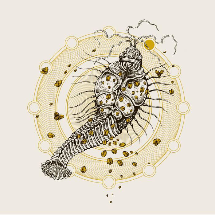 "Suma / Ultraphallus Split 7"" cover art"