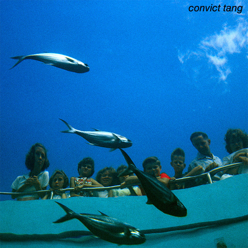 Convict Tang Wiki Convict Tang Cover Art