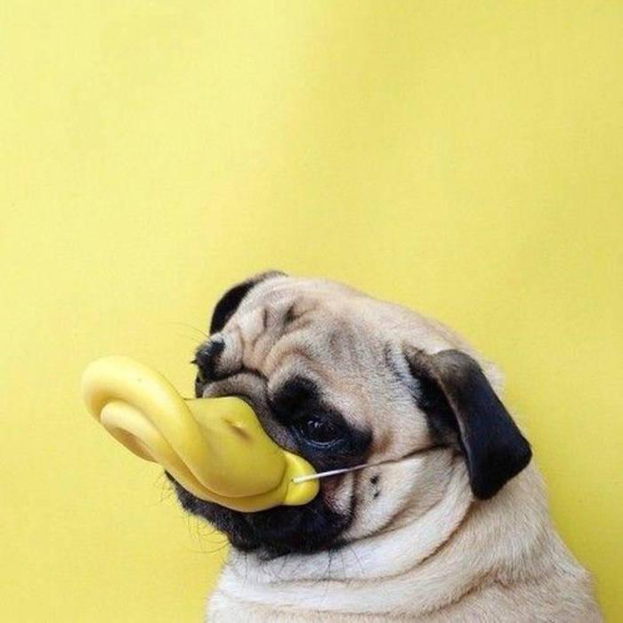 half dog / half duck cover art