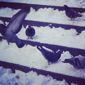 Winter Sampler 2012 cover art