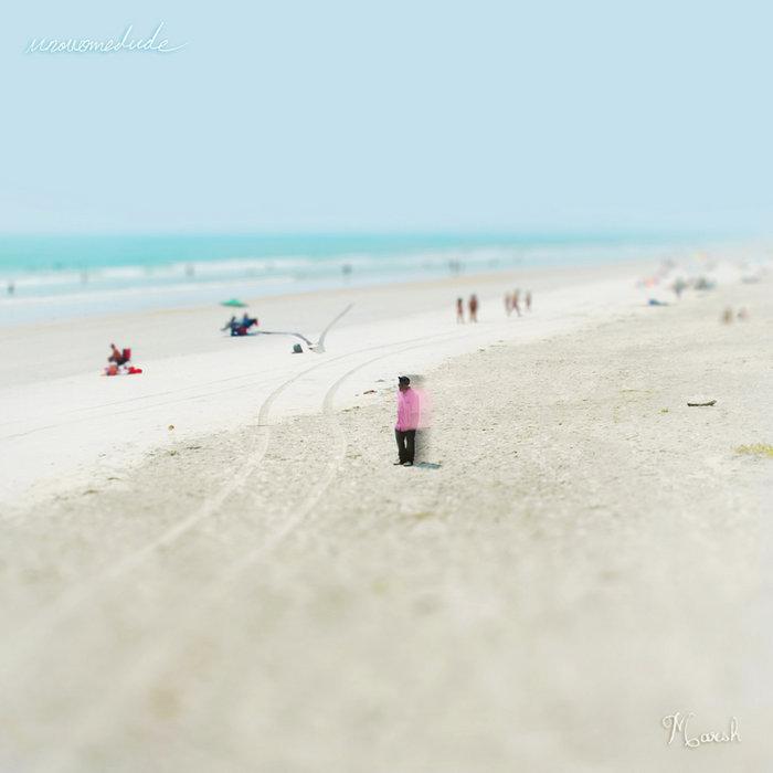 Marsh cover art