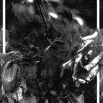 Oleander cover art