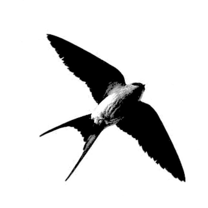 birdsong (for Ai Weiwei) cover art