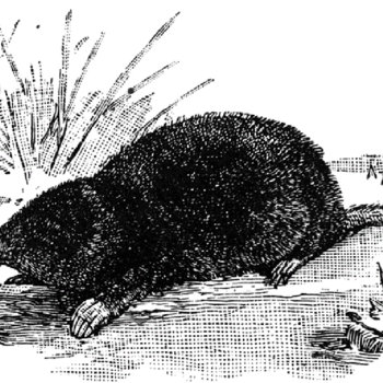I Wish I Was a Mole in the Ground cover art
