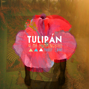 Tulipán - 4MHB cover art