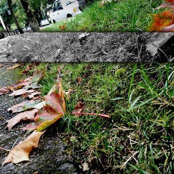 Like Fall(ing) cover art