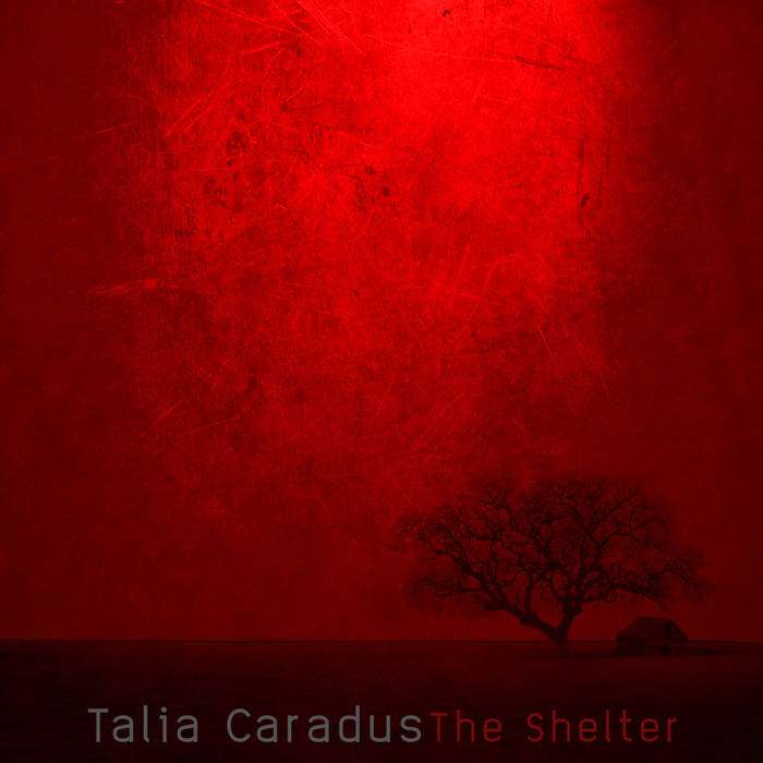 The Shelter cover art
