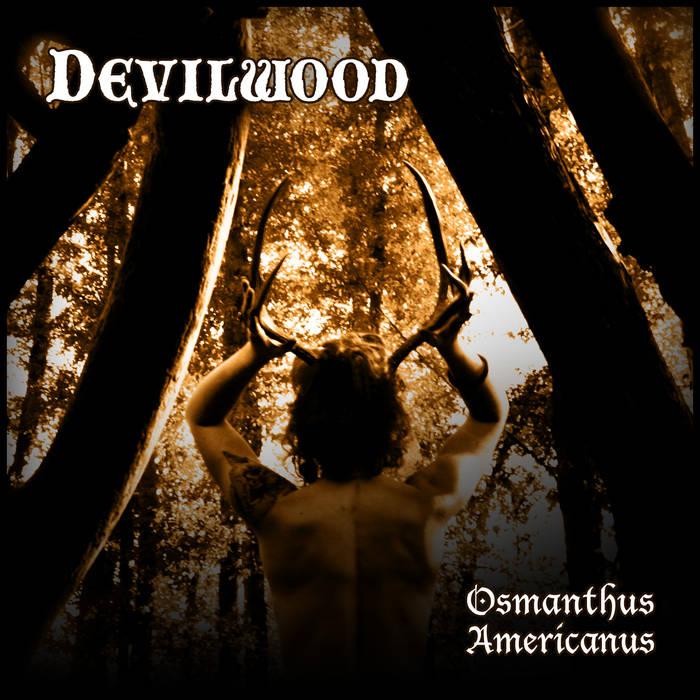 Osmanthus Americanus cover art