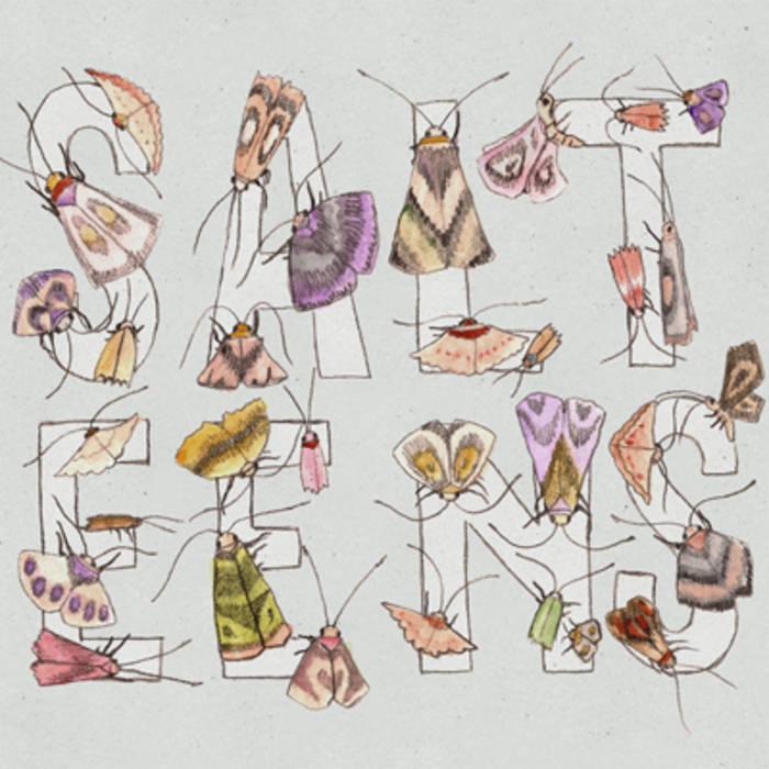 Moths cover art