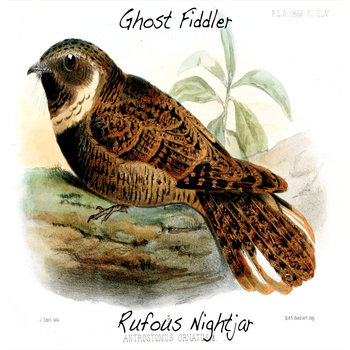 Rufous Nightjar cover art