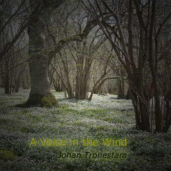 A Voice in the Wind cover art