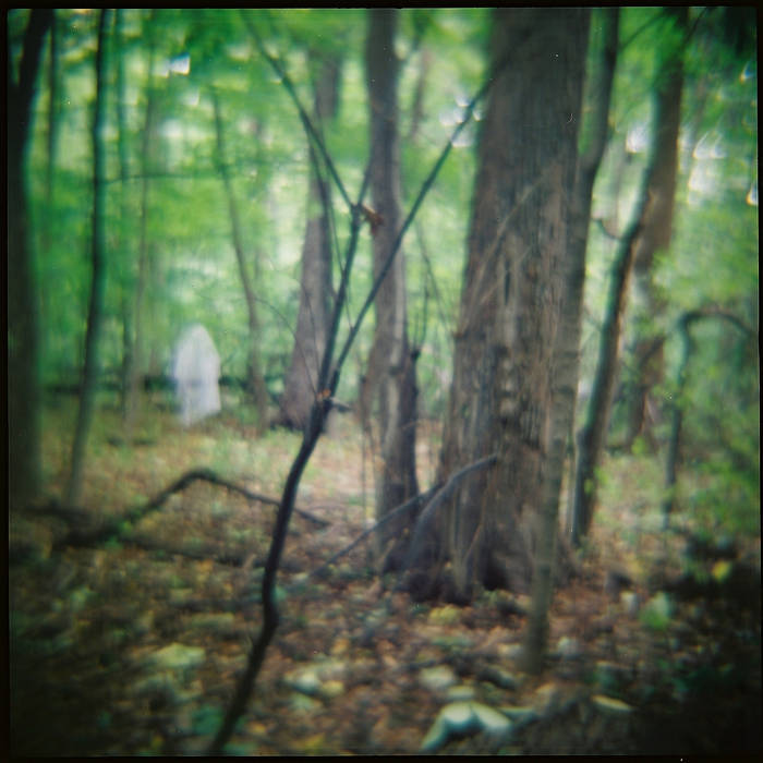 Seminary Woods cover art