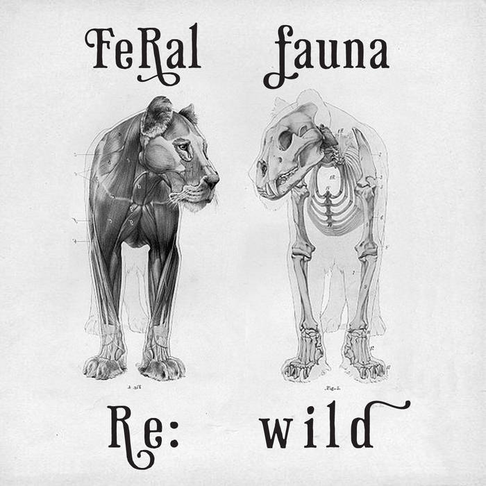Re:wild EP cover art