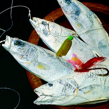 Single Fish Sight cover art