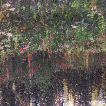 Nectar cover art