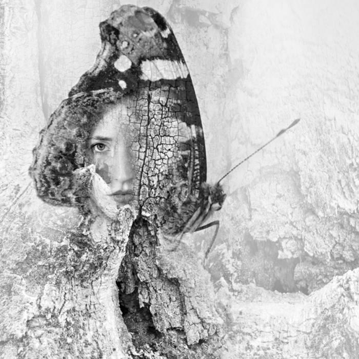 dagger moth cover art