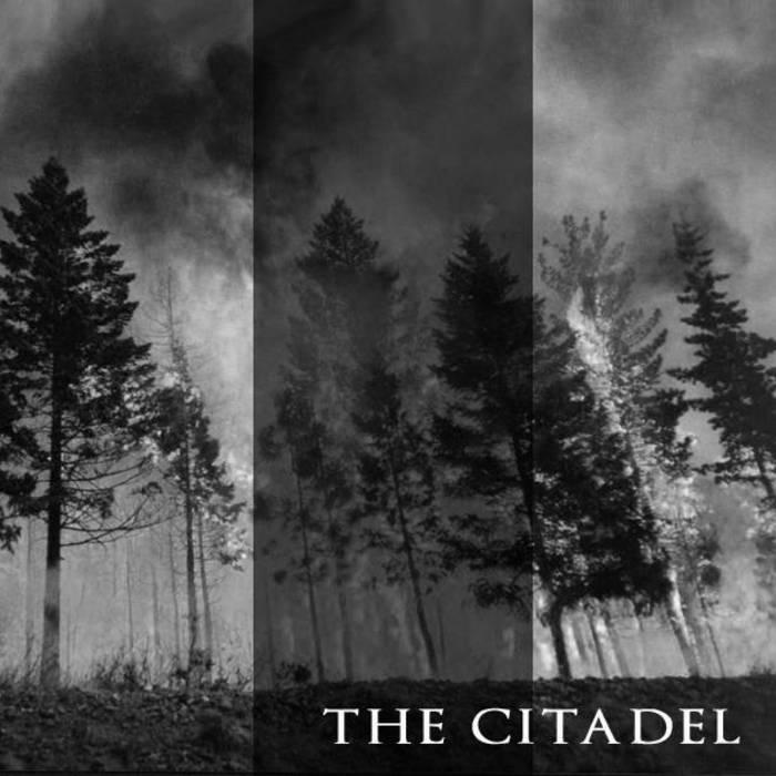 split The Citadel / Tyrell's Owl cover art