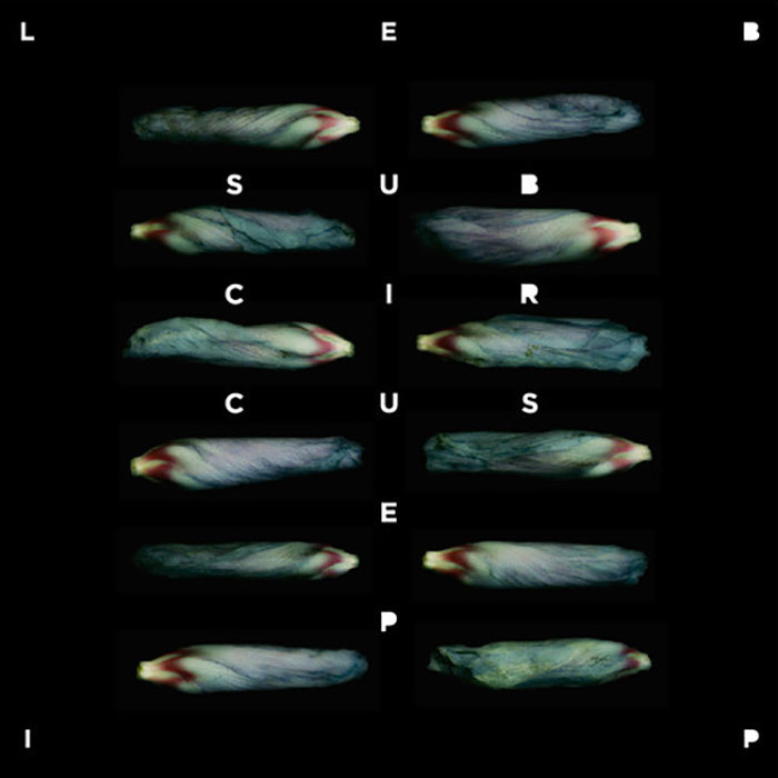 Subcircus EP cover art