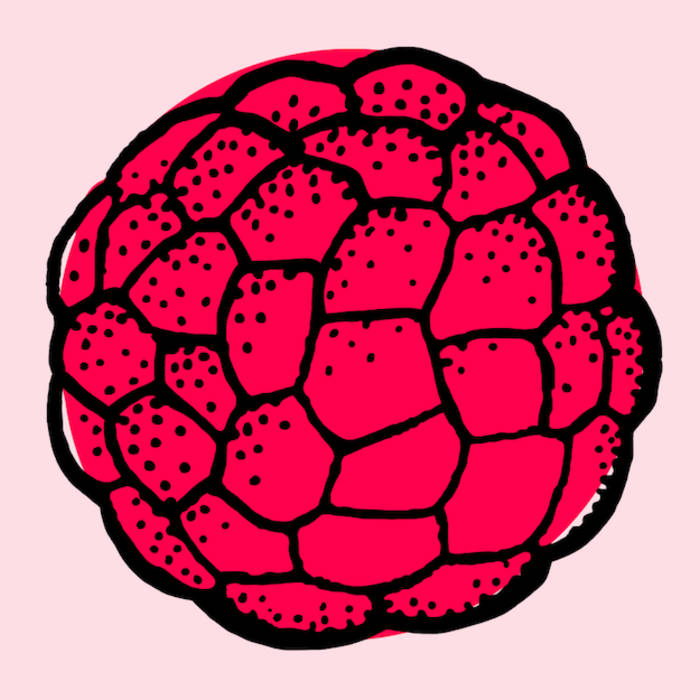 Raspberry EP cover art
