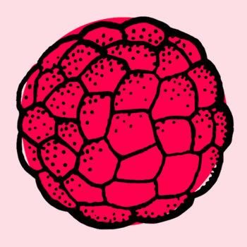 Raspberry EP cover art