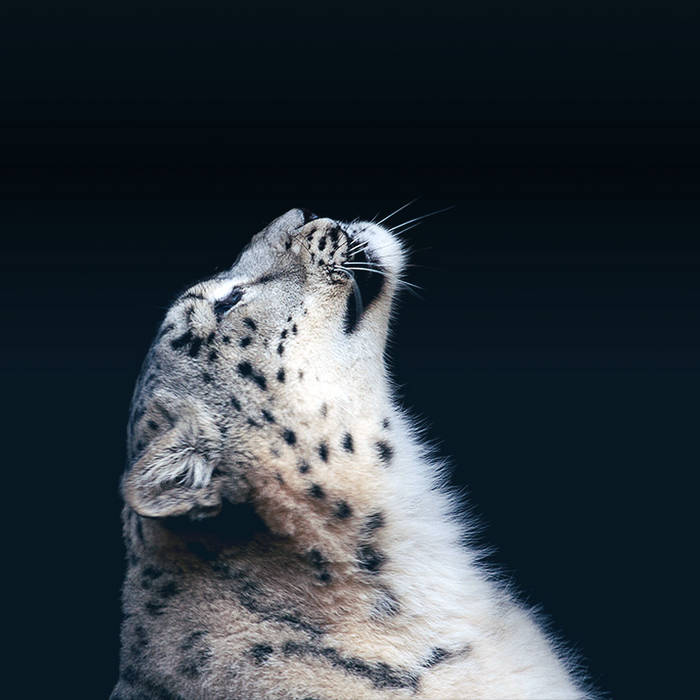 Eye of the Snow Leopard cover art