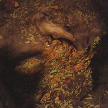 """Van Schönberg """"solleroder"""" cover art"""