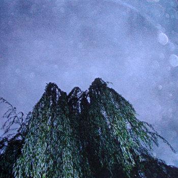 Un Arbol cover art