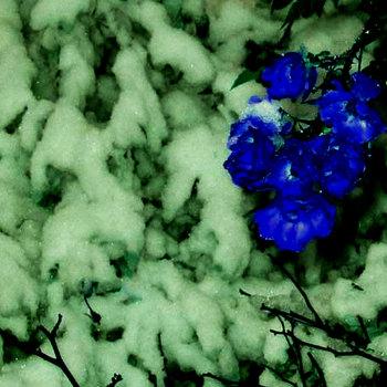 violets cover art