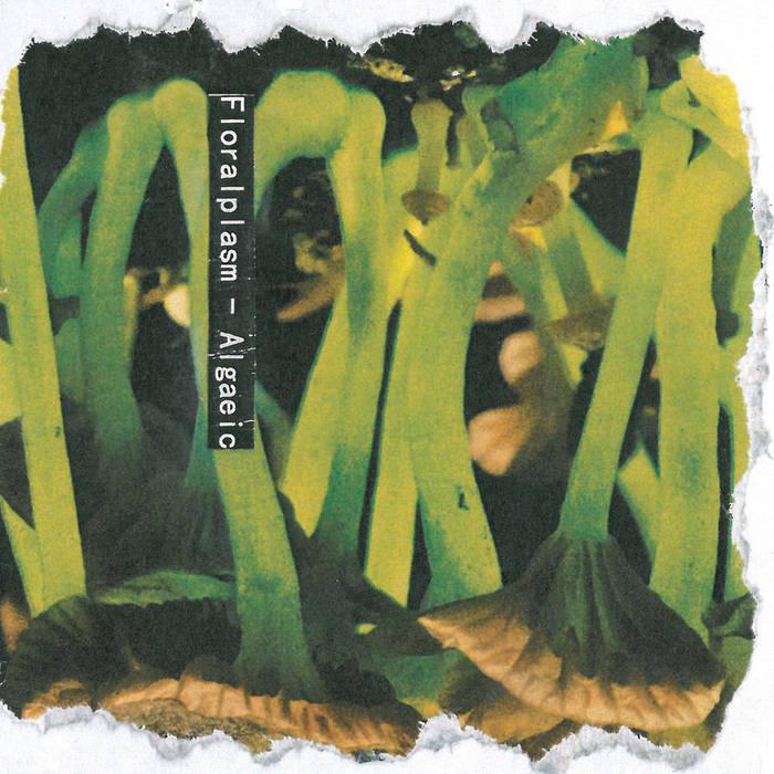 Algaeic cover art