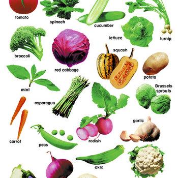 Vegetable Hotel cover art