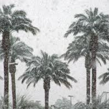Diana Gitallog & Pacifico - Snowy Palms cover art