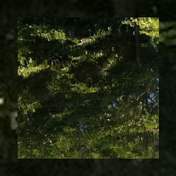 Birch Slap (guitar) cover art
