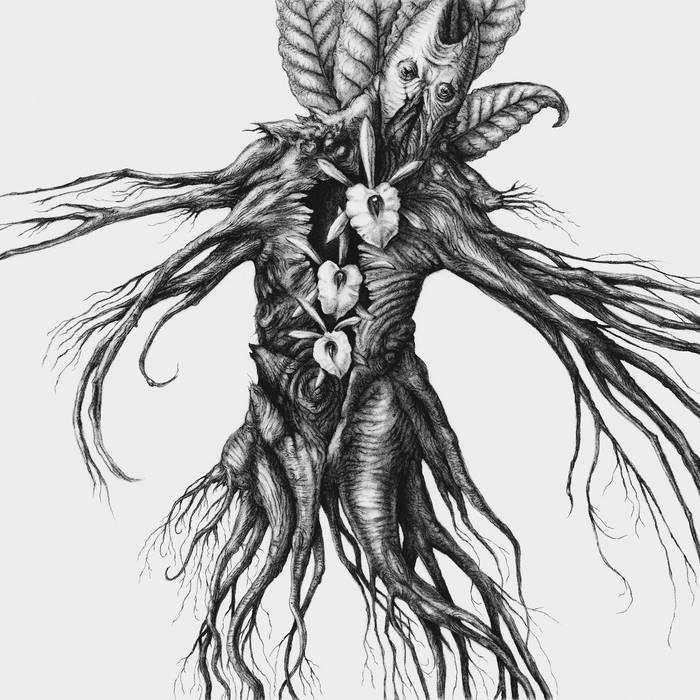 IV: Mandragora cover art