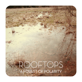 A Forest Of Polarity cover art
