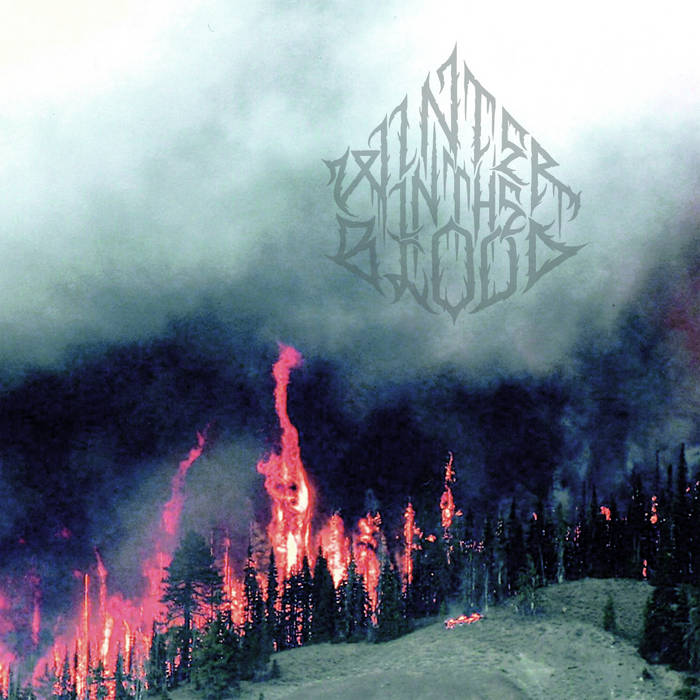 Forest Fires cover art