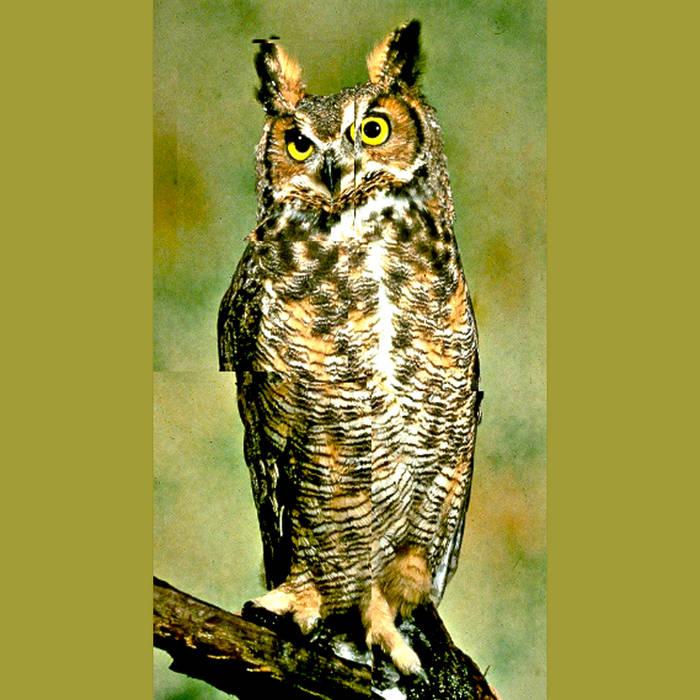 Snake V Owl cover art