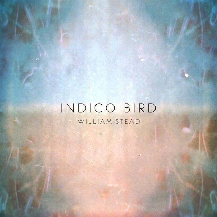 Indigo Bird cover art