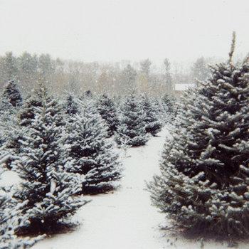 Last Christmas cover art