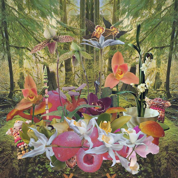 Return to Paradise cover art