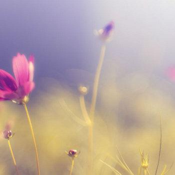 Flowers cover art