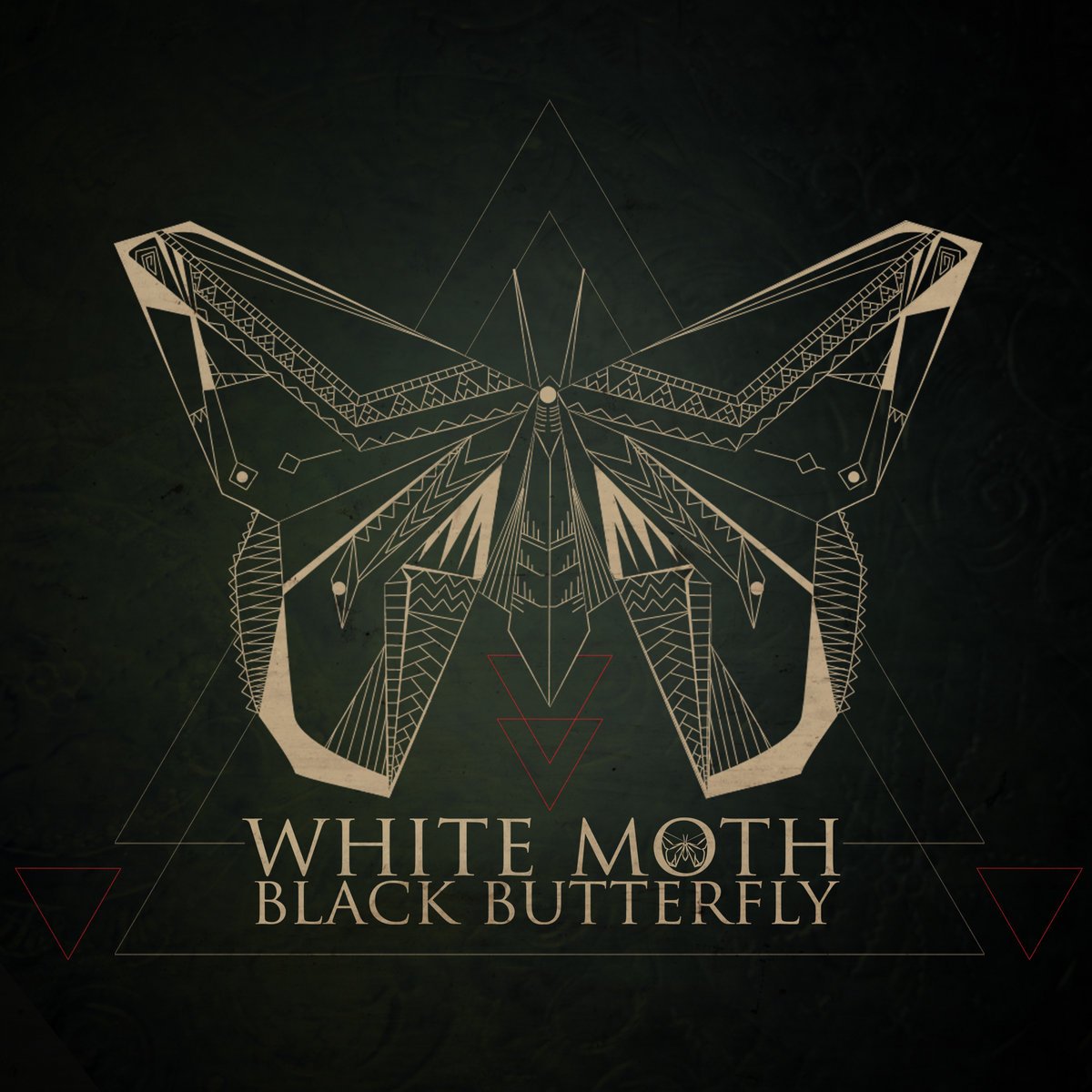 White Moth Black Butterfly