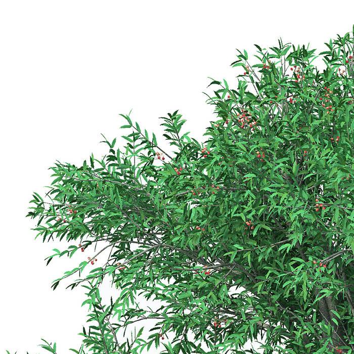 木の反射 - Body [Disc I]