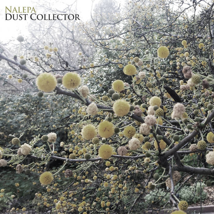 Dust Collector EP cover art