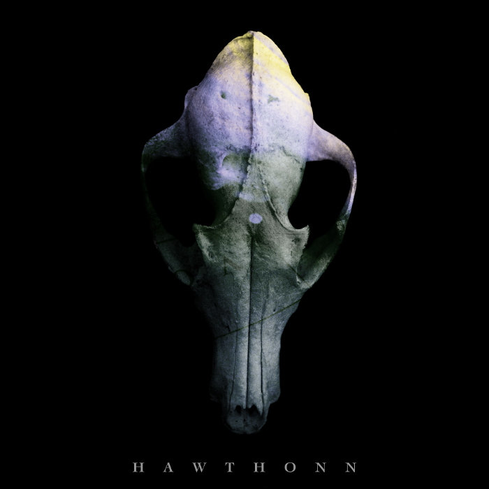 Hawthonn cover art