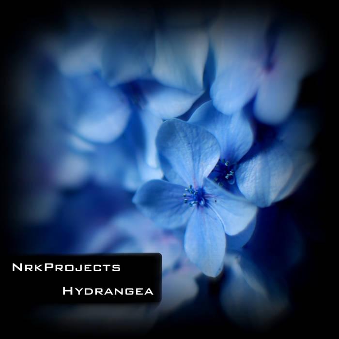 NrkProjects - Hydrangea (Original Mix) cover art